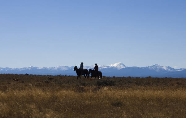 Horses in meadow with mountain range